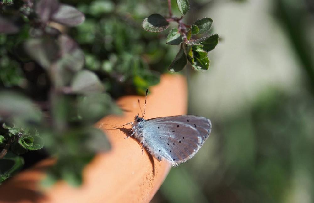 selective focus photography of gray butterfly during daytime