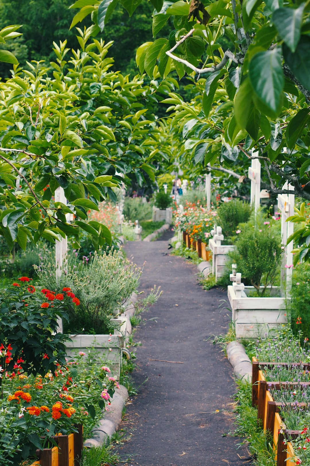 5 Things To Consider Before Renovating Your Garden This Summer