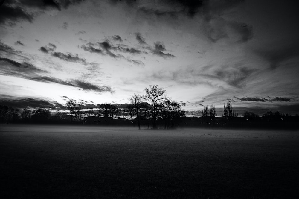 grayscale photography of withered trees