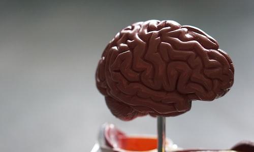 brain fills facts