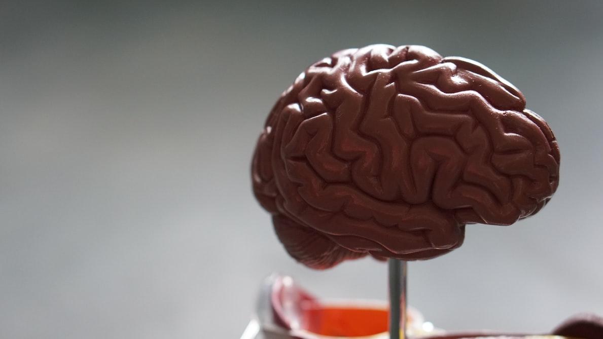 Plastic brain on a stick