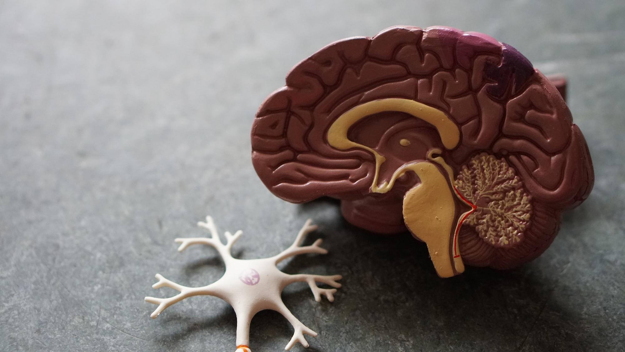 Newsletter #18 - The human brain unlocking AI