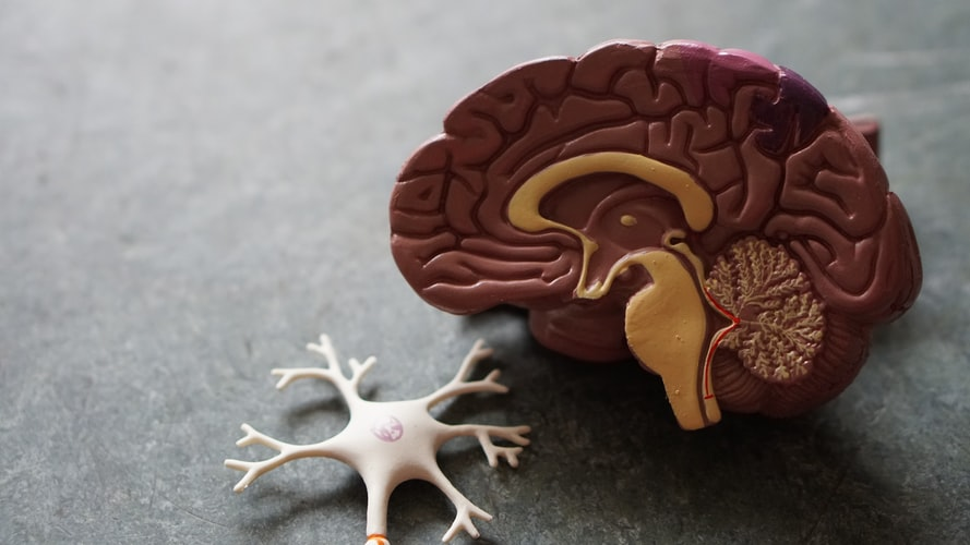 מוח מפלסטיק. האם הדמיה מוחית תוכל ללמד אותנו על המאוויים האמיתיים של האנושות?