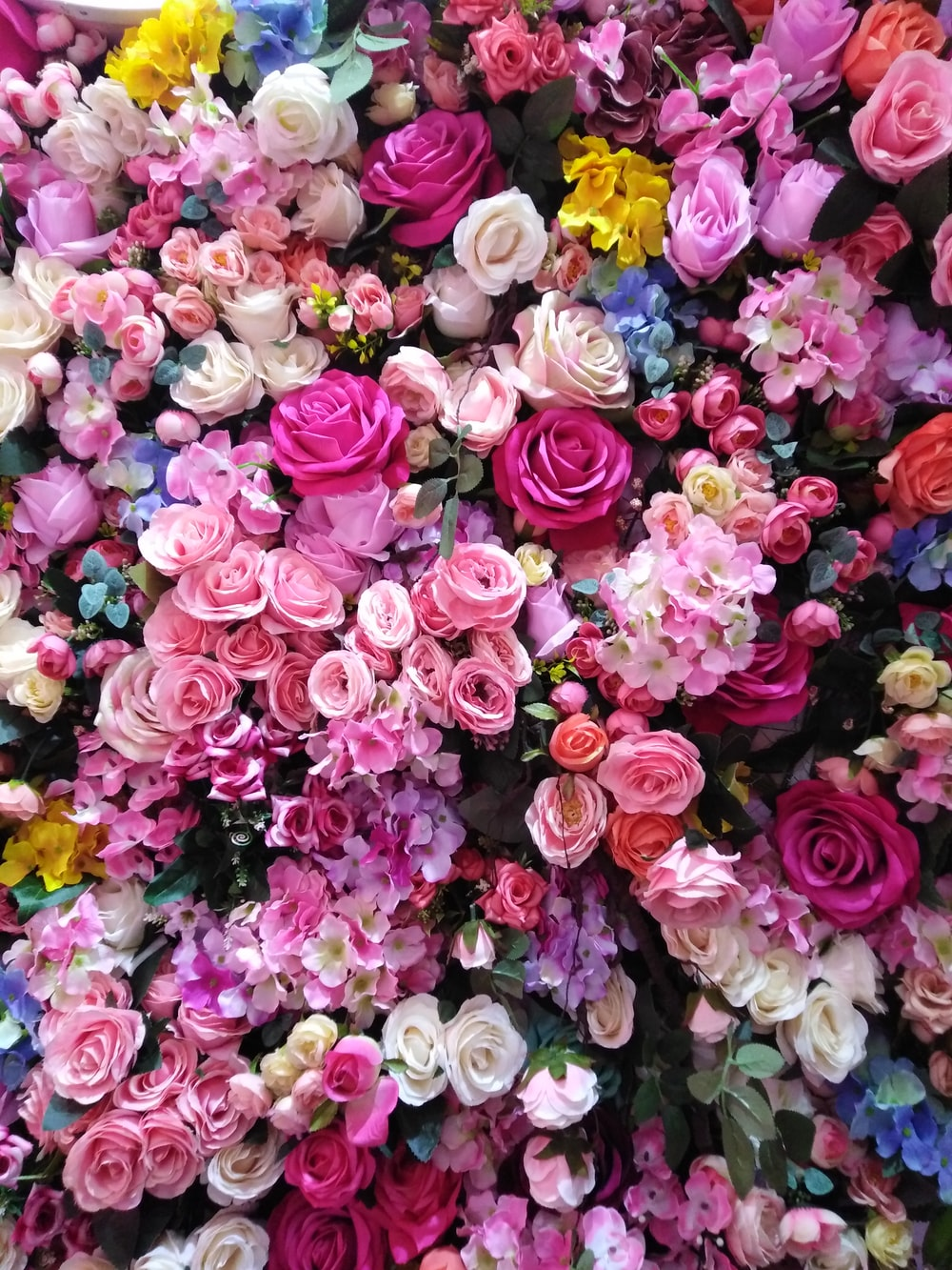 assorted-color rose flowers