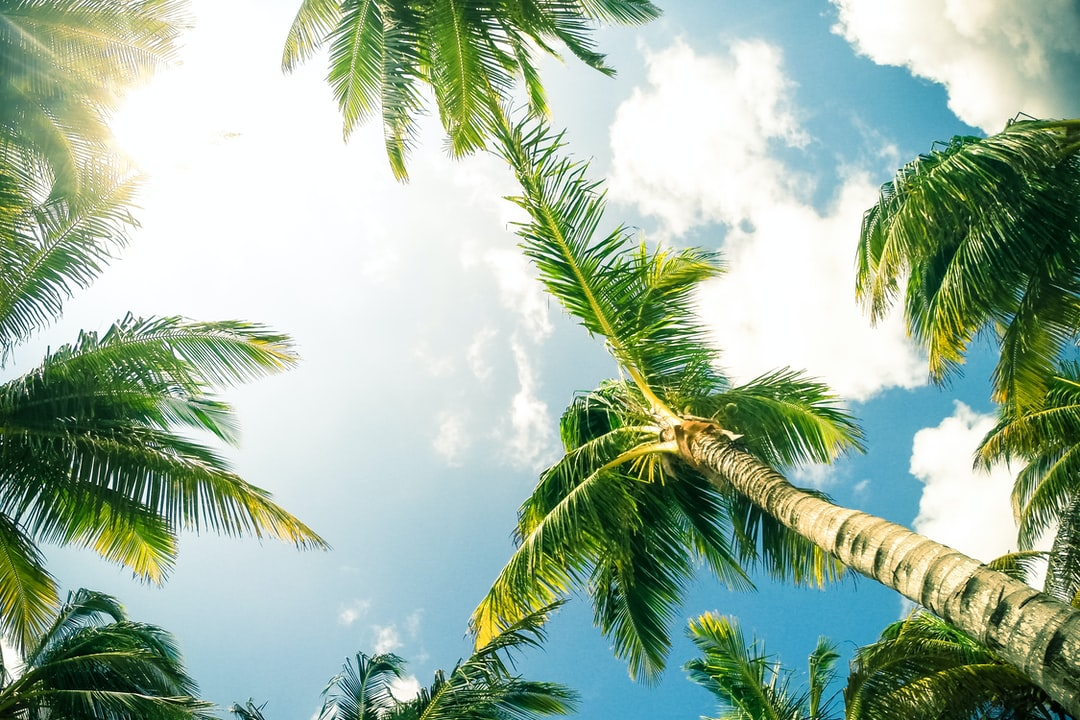 Sit back and relax. Soak up some rays under the palm trees.