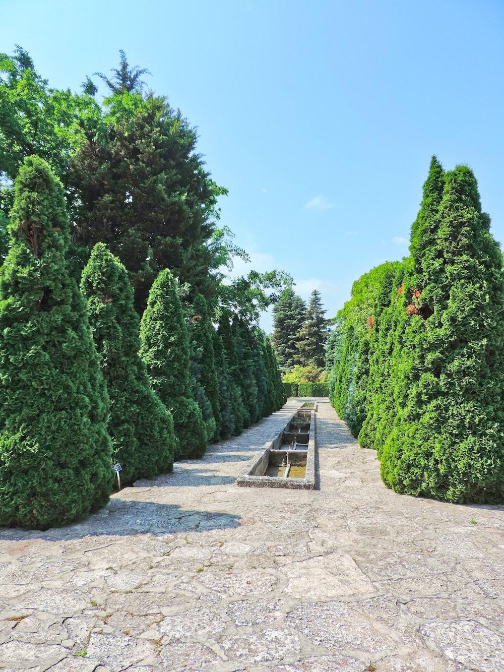 green-leafed hedges during daytime