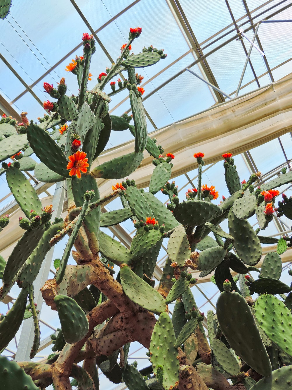green cactus plant with flowers