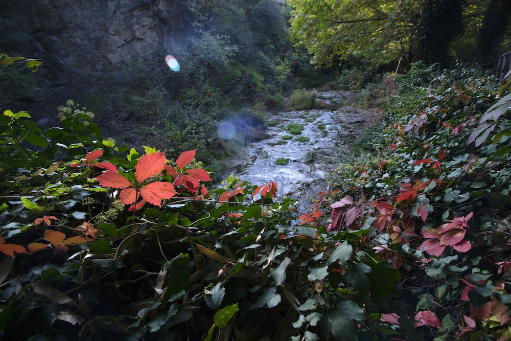 water stream withflowers in side