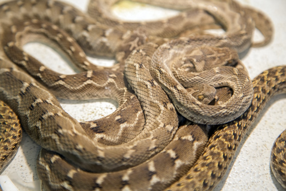 selective focus photography of brown snake