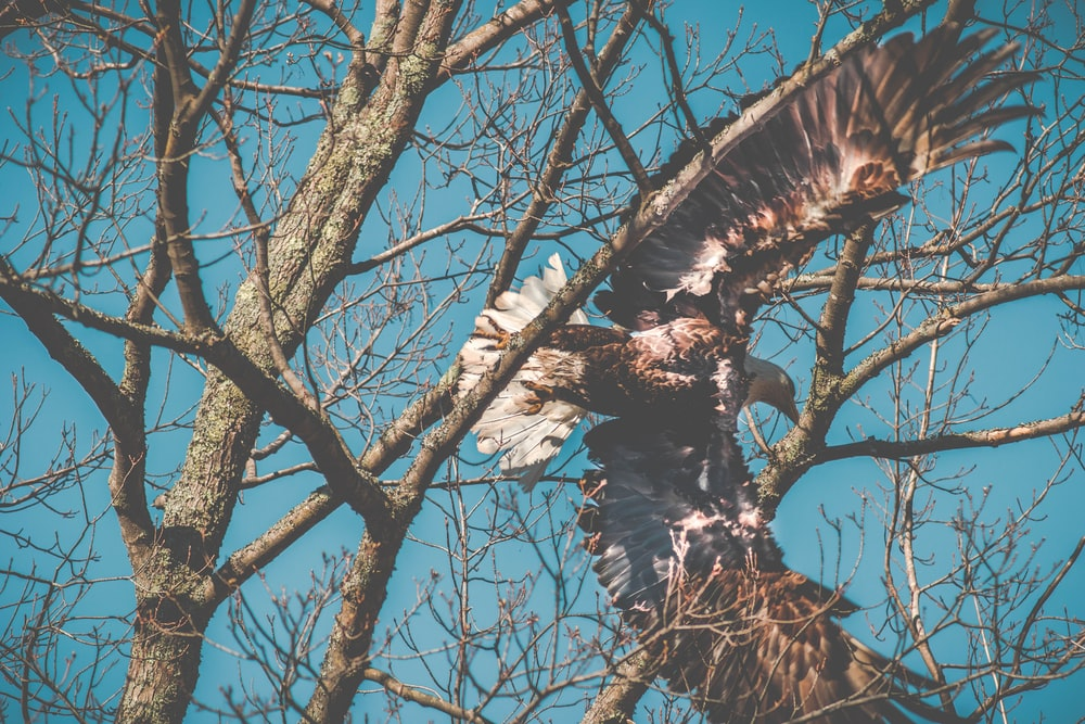 falcon flying beneath tree branches