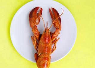 lobster on white saucer