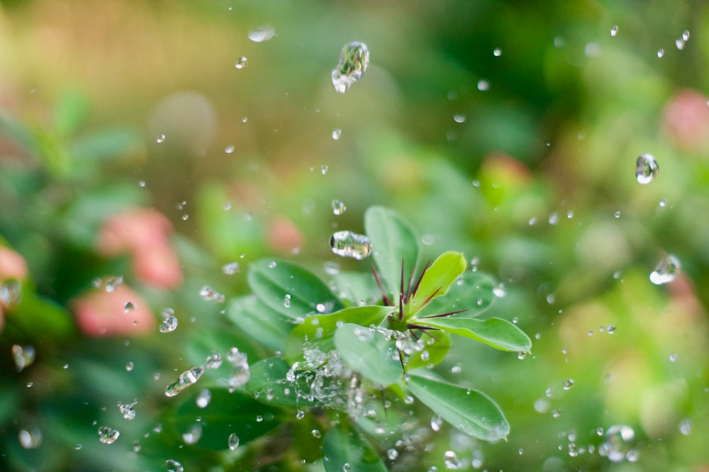 water drop on green leaf plant