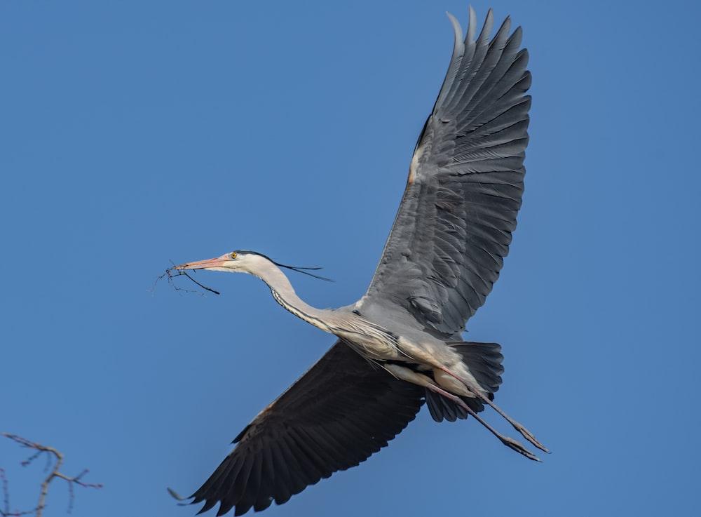 black and gray long beaked bird flying