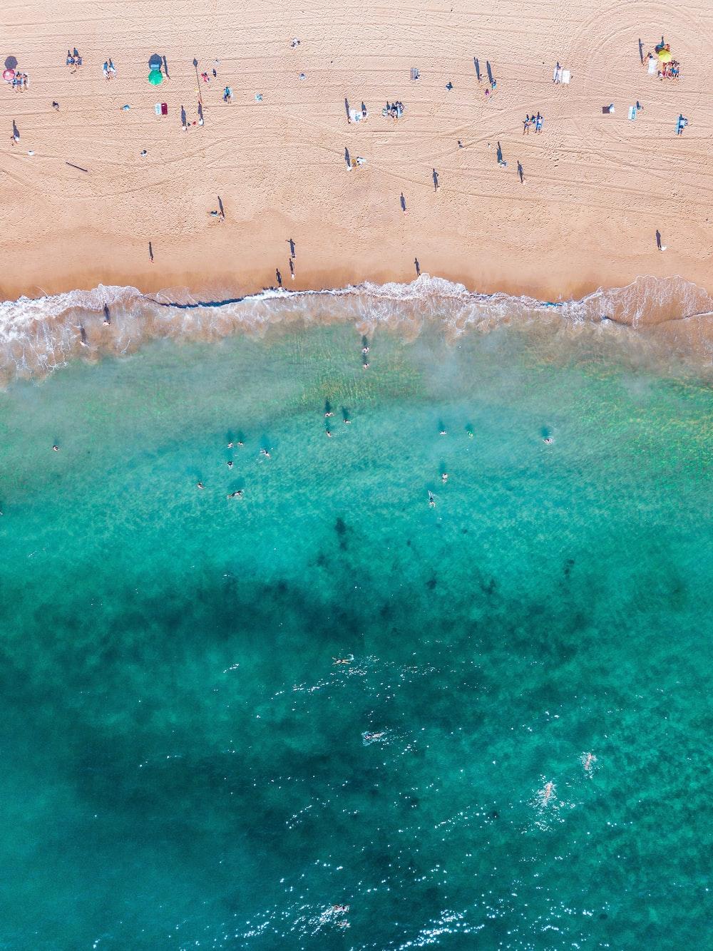 bird's eye view of shore