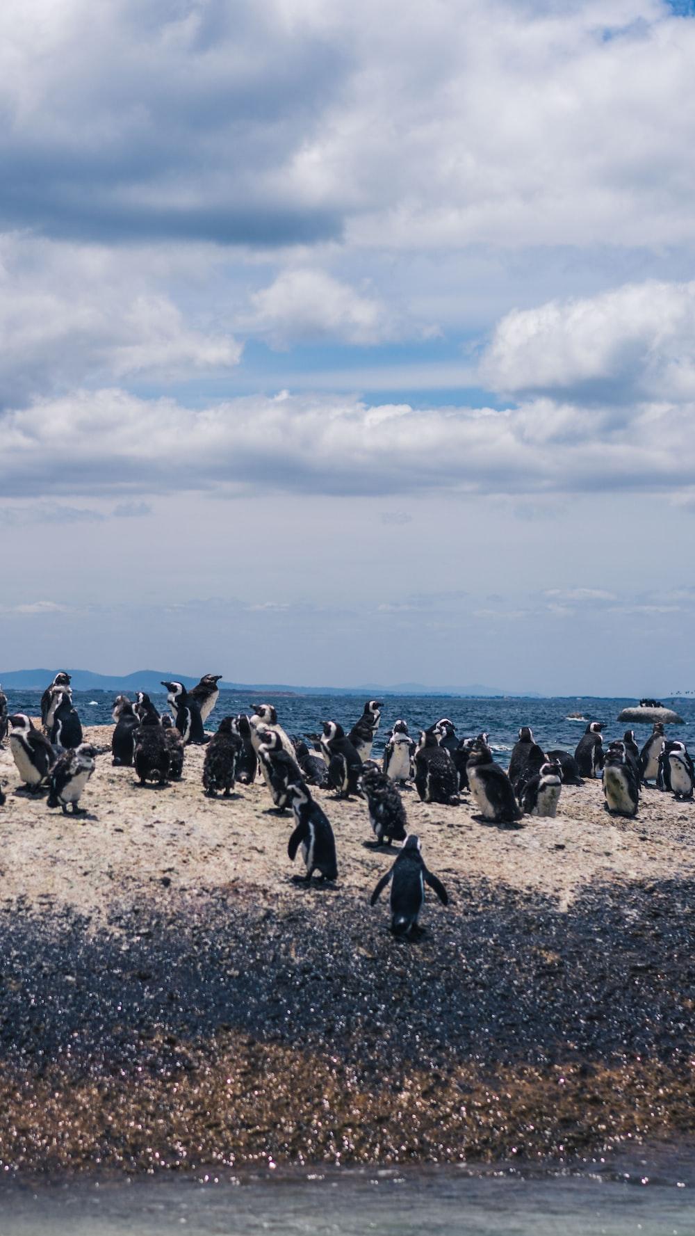 herd of penguins on seashore