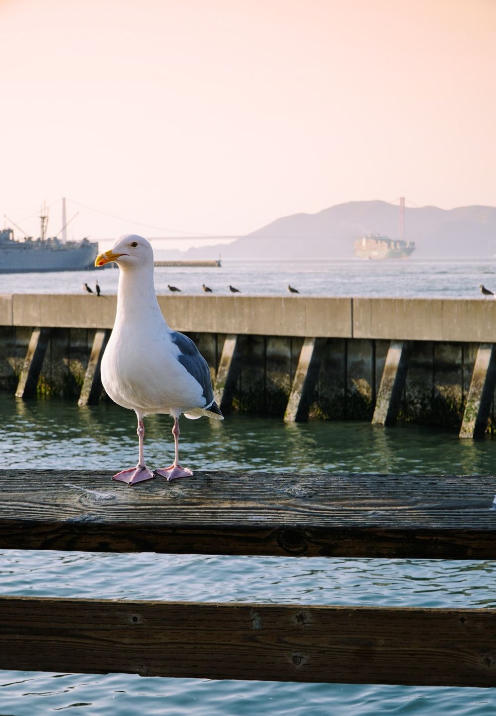 seagull on wooden dock