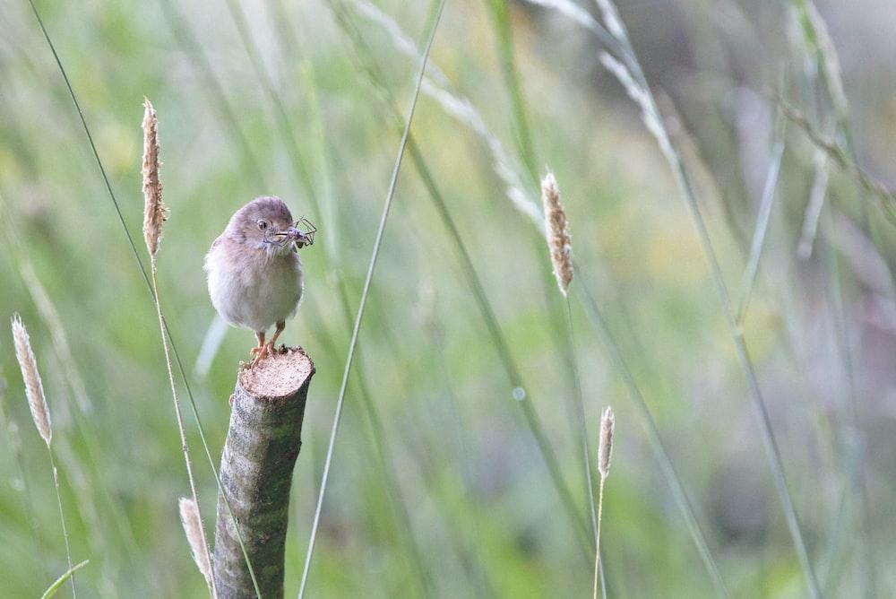 bird on cut branch during daytime