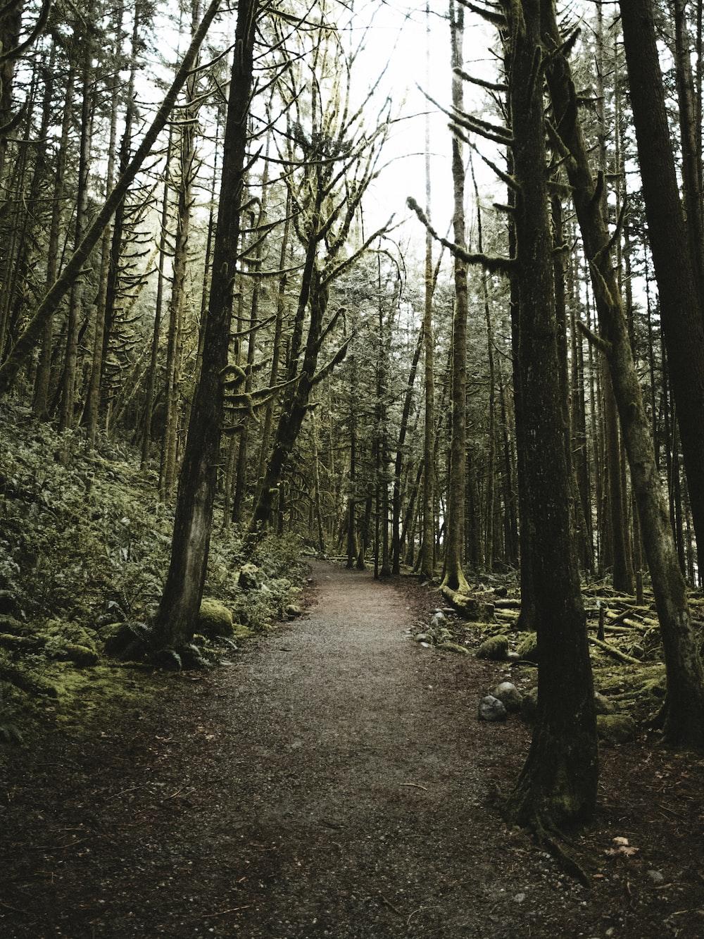 dirt road between trees