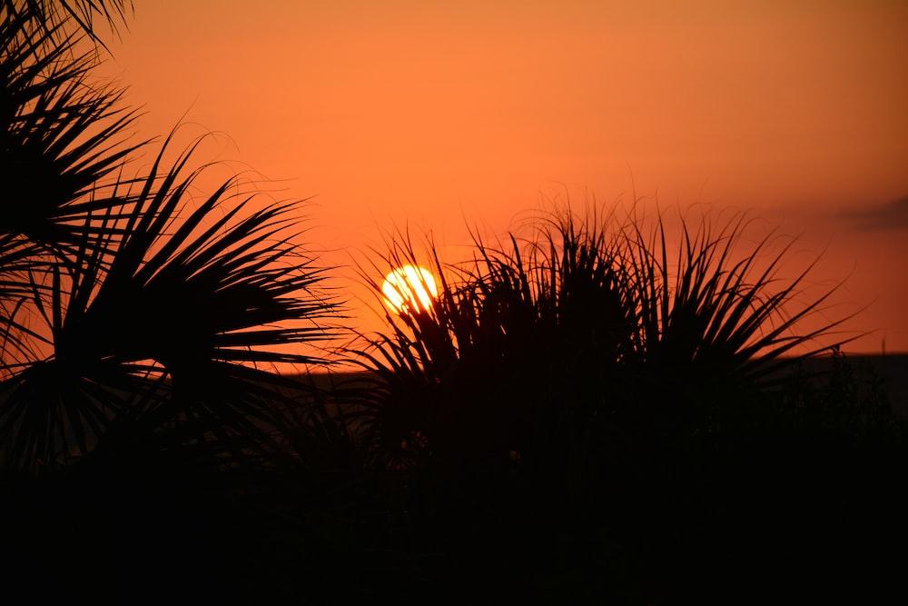 silhouette of grasses across sunset