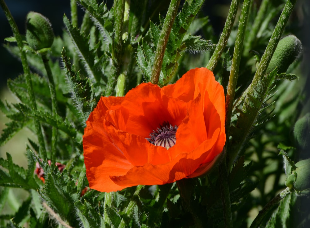 orange-petaled flower