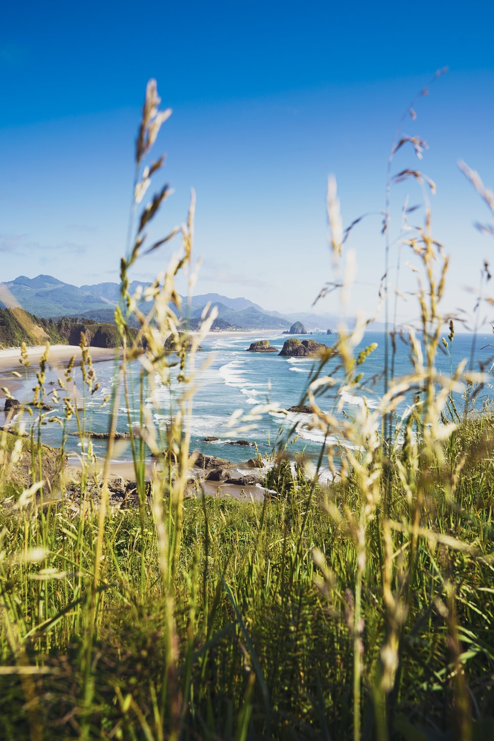 green grass with seashore background