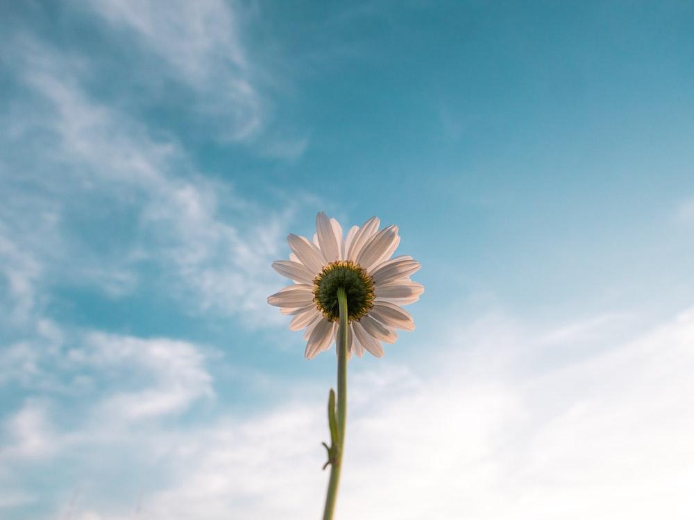 photo of white-petaled flower