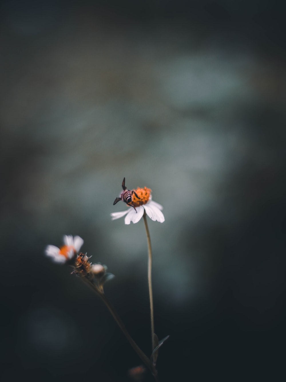 focus photography of bee on white-petaled flower