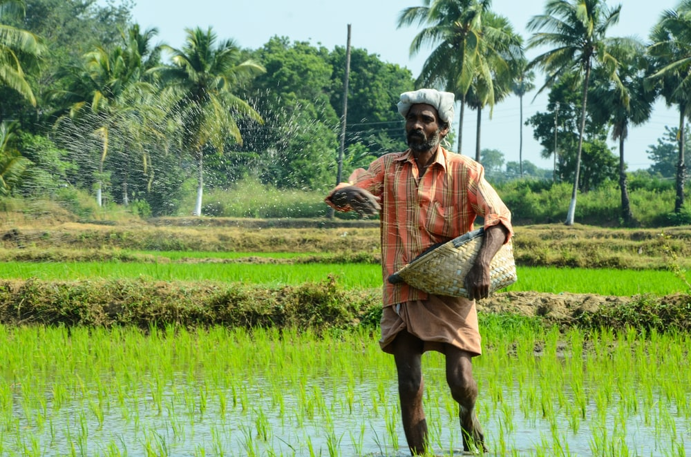man standing while carrying wicker basket in the middle of rice field surrounded with tall trees