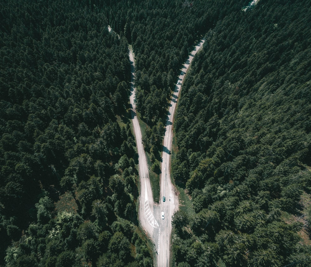 high angle view photography of road between forest