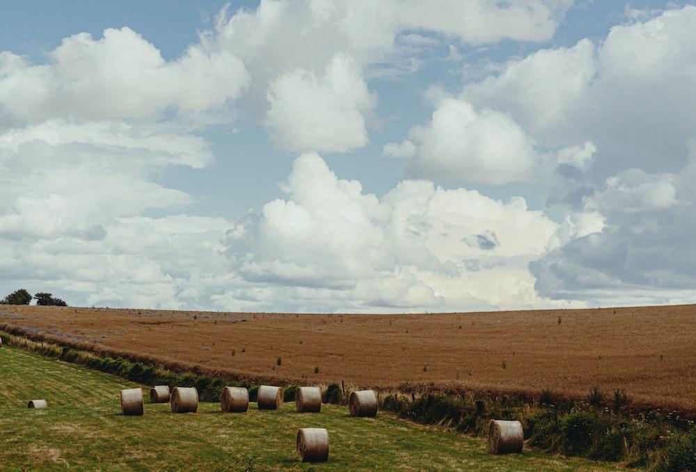 green grass under clear blue sky