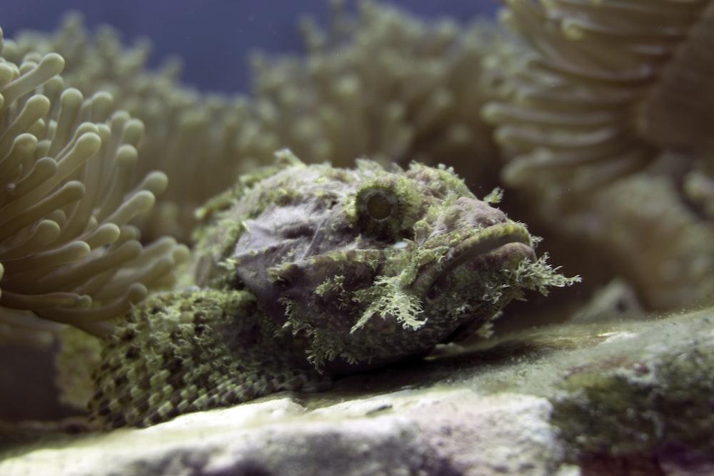close photo of fish