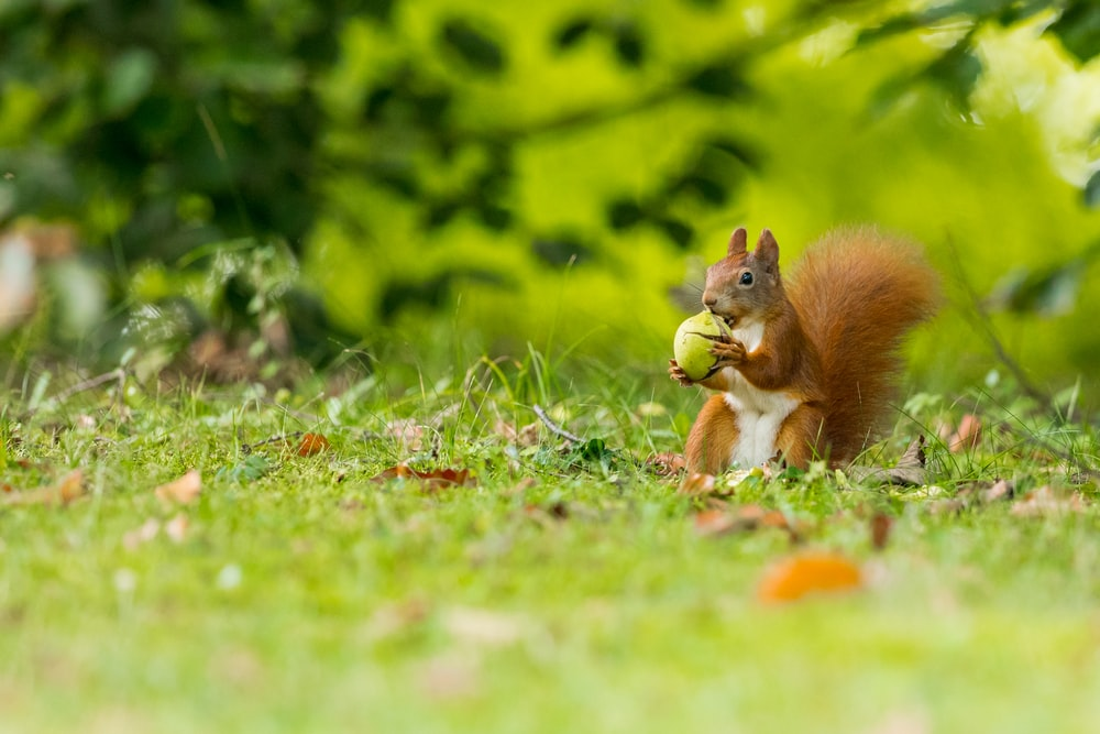 selective focus photography of squirrel holding nut