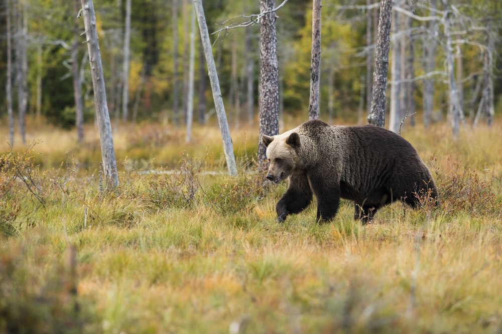 black bear near trees