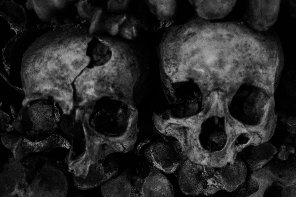 2 skull portrait