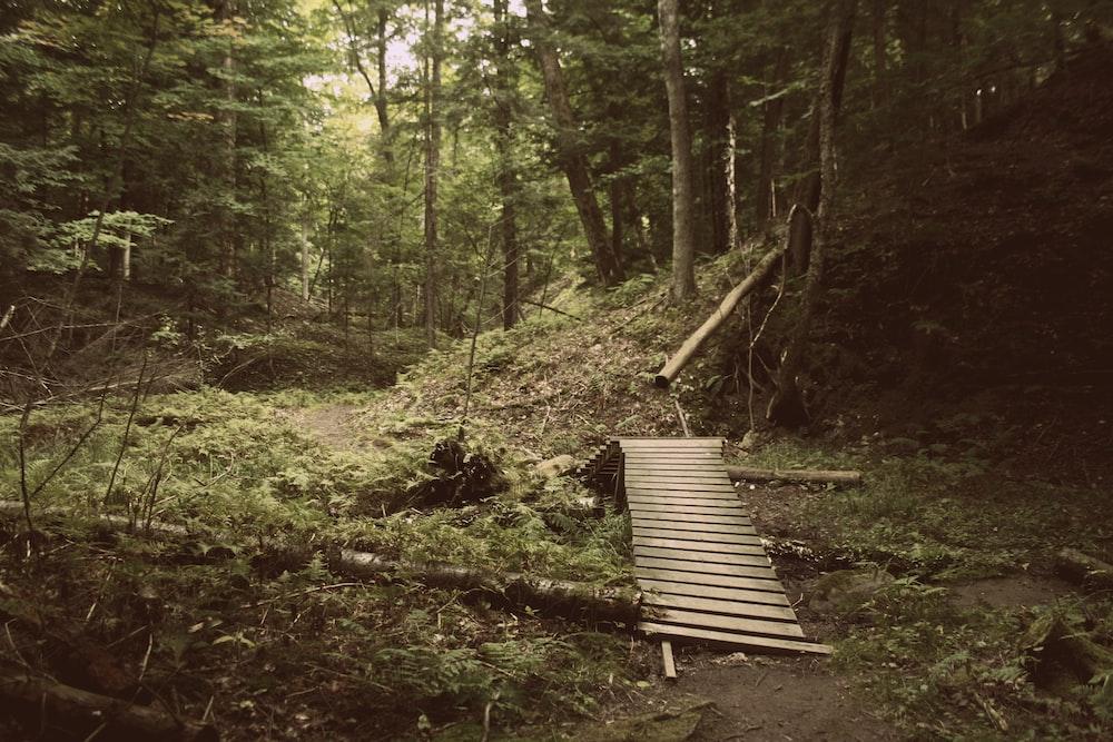 gray wooden bridge on forest