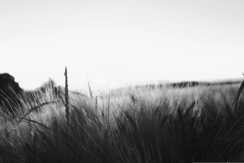 grey grasses
