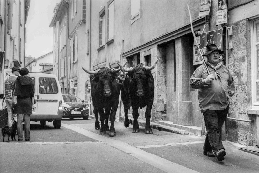 man walking in front of buffalo