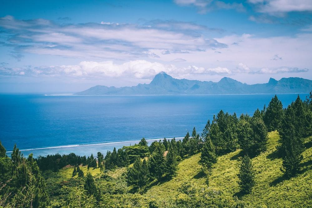 trees on mountain near ocean