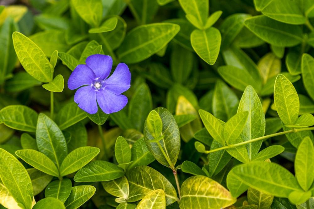 blue-petaled flower