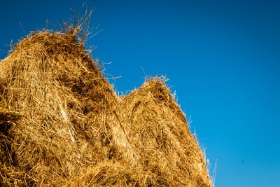 brown hay under clear blue sky straw zoom background