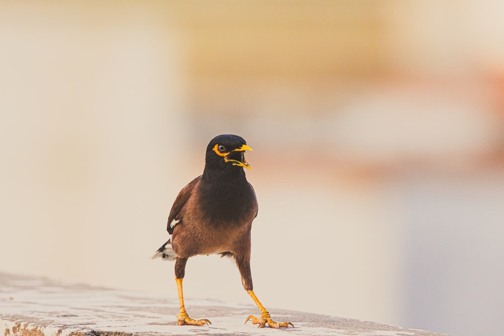 selective focus photography of brown and black bird