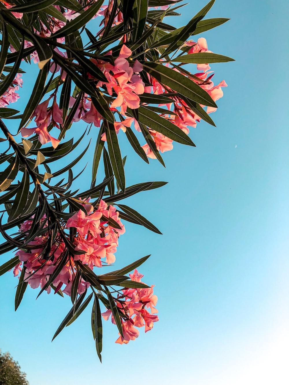 pink petaled green leafed flowering plant