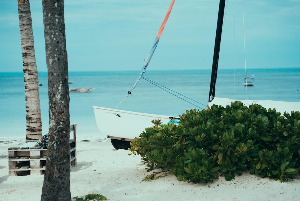 boat on shore near plant