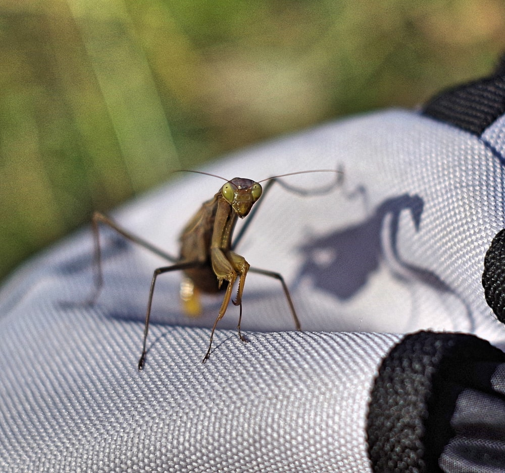 photo of brown mantis
