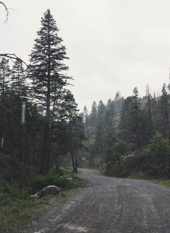 dirt road between trees under cloudy sky