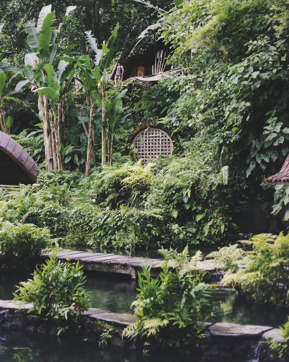 green plants beside eock