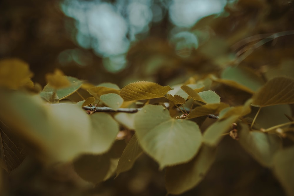 green leaves in selective-focus photography