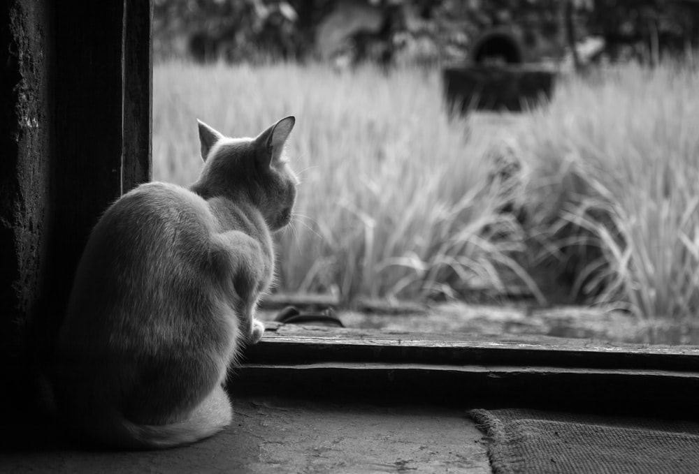 grayscale photography of cat sitting in front of grass