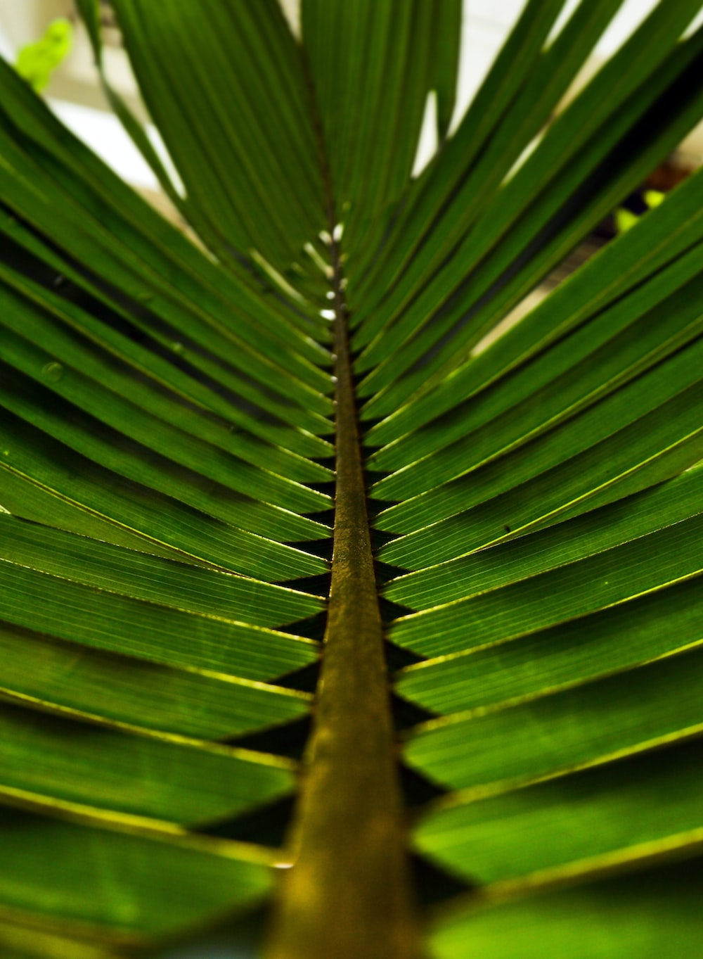 shallow focus photo of green leaves