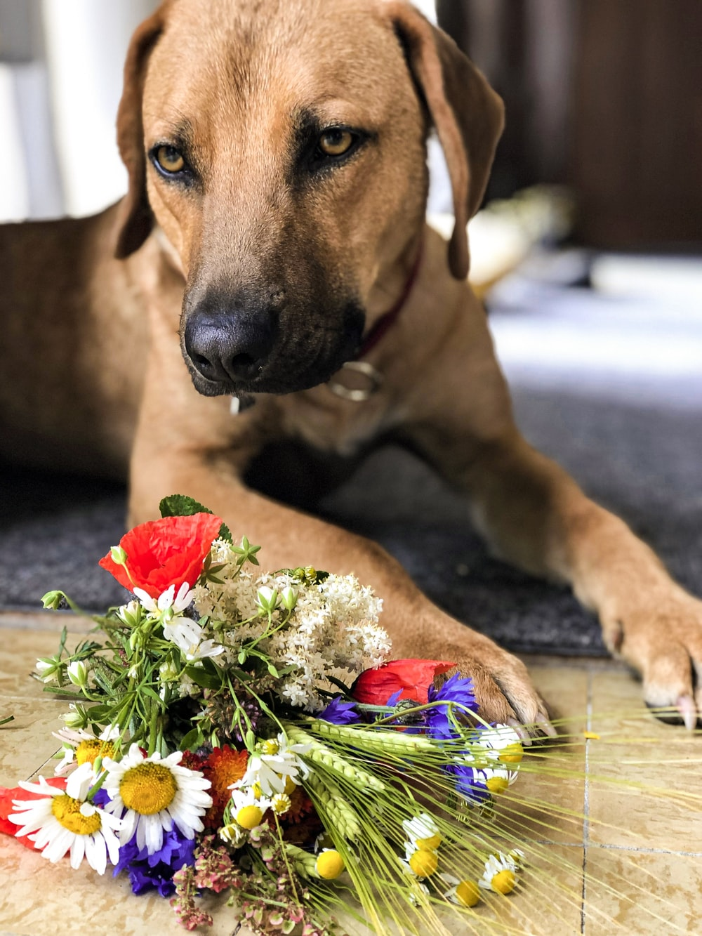 short-coated brown dog near bouquet of flowers
